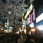 Jongro by night under the cherry blossoms