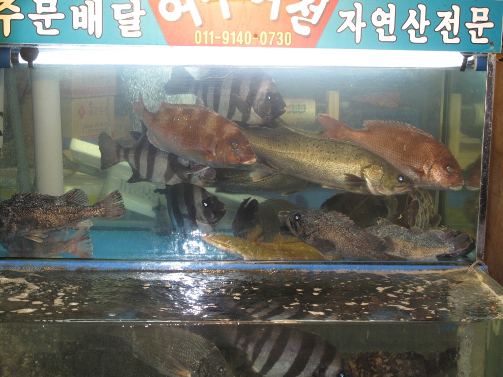 Flash back to dinner before we ate it: Seoul Fish Market